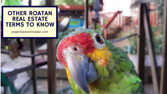 Other Roatan Real Estate Terms to Know